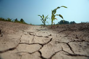 Water Control for Agricultural Innovation | Flowmetrics